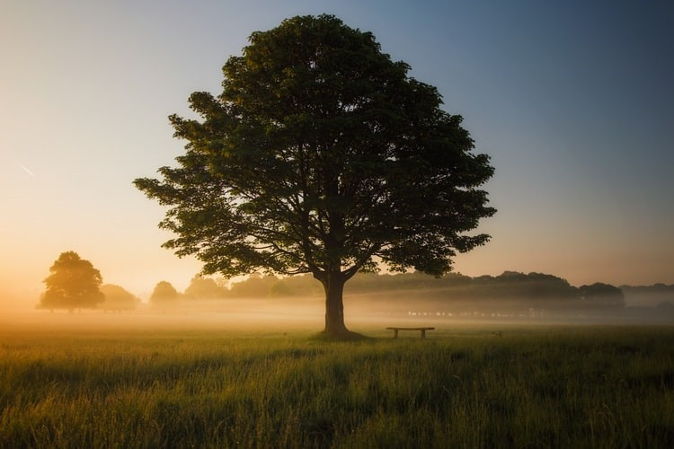 Mindfull Tree for Meditation